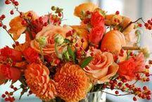 fleurs orange-mandarine-sanguine