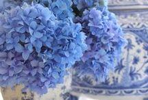 fleurs bleu-azur-outremer-ciel