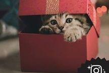 """#lindocatinabox - photocontest / Il Photocontest #lindocatinabox promosso da Lindocat  Partecipa e vinci fino ad un anno di lettiere, è semplicissimo:  Registrati cliccando sul sito www.lindocat.it e pubblica la tua foto su instagram usando il tag #lindocatinabox  Le foto che avranno ricevuto più """"cuori"""" vinceranno una fornitura di lettiere lindocat..."""