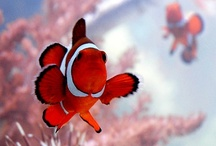 clown fish / by Eve Phixars