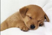Puppies!