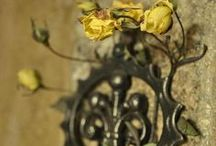 Tücsök Kert csodái és az Édes Otthon / My Mom's garden and Sweet Home