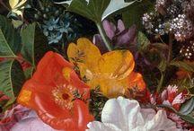 Bouquet 1650-