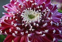 κηπουρικη / Λουλούδια