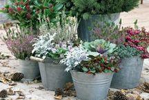 Authum garden | Herfst tuin
