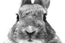 Animals | Dieren / Stijlvol Styling woonblog - www.stijlvolstyling.com