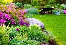gardening tips, inspiration and flowers / I want to have a green thumb and create my dream garden for my home.  / by Our house now a home