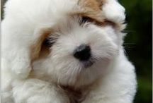 Dog Puppies / Fun Photos of Puppies