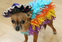 Creative Dog Costumes / Dogs dressed up including Halloween