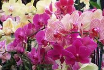 Brookside Orchids Retail Store / Retail & Wholesale. Hybrid and species orchids as well as mature seedlings and meristems. Flower arrangements made as you wait.  Store hours: Mon - Fri 7:30 - 3:30, Sat 10:00 - 3:00.  Address: 2718 B Alpine Rd. Menlo Park, CA. 94028      Phone: 650-854-3711   Website: www.brookside-orchids.com