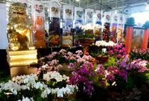 """Pacific Orchid Exposition 2014 / The San Francisco Orchid Society invites everyone to paint the town with """"Orchids and All that Jazz"""" , February 20-23, 2014."""