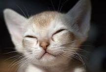 Cute Cats / Chats mignons