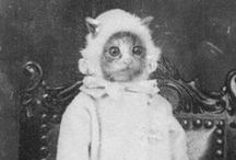 Vintage cats / Chats vintages