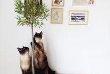 Cat dwelling / Chat d'intérieur / Cats and interior designs / Décoration intérieure et chats