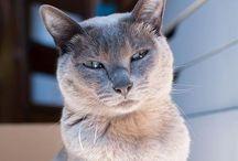 Majestic cat / chat majestueux / Chat majestueux / gracious cats