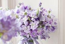 Purple - my favourite colour / colour, purple, design, photography