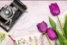 Springtime / Spring, nature, seasonal stock photography, styled desktops