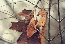 ОСЕНЬ / Есть в осени первоначальной Короткая, но дивная пора — Весь день стоит как бы хрустальный, И лучезарны вечера... Пустеет воздух, птиц не слышно боле, Но далеко еще до первых зимних бурь И льется чистая и теплая лазурь На отдыхающее поле...  (Ф. Тютчев)