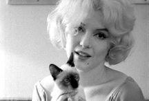 Celibrities & cats/ Célébrités et les chats / Stars, cats, vedettes, chats