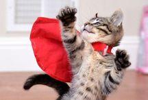 Superhero cat / chat super héros / Superhero cat / chats super héros