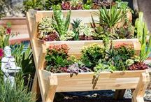 !! Bake It With Love - Gardening / All of our favorite gardening ideas and tips...
