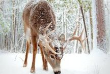 Outdoors/Wildlife / by kristy feist