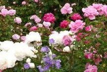 FloralObssessed