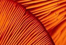 Tangerine Dream / Orange at www.nipperskipper.co.uk Inspirations & clothing