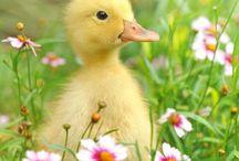 Just Ducky / Well, ducks.