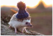 Animals in Clothing / Animals. In clothing. You know, like clothes.