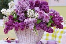Lilacs and Flowers I Love / Lilacs, roses, peonies, daisies, etc.