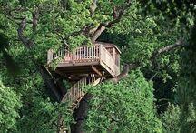 My future treehouse.