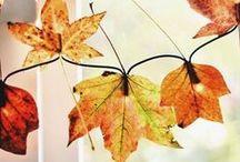 podzim/autumn / obrázky k tématu podzim, podzimní dekorace / Pictures on the topic autumn, autumn decorations