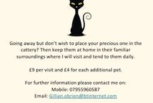 Catace / Small pet sitting service in your own home. For a quote just email or contact me on the number below.