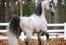 Horses / by Jackie Nicholson