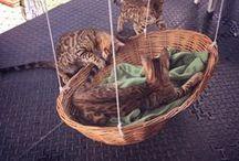 Coisas de/para Gatos