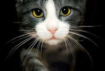 Cats / Love cats! / by Jennifer Hatfield