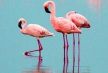Pink Trees & White Animals