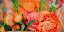 Tangerine Wedding