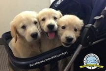Puppies! / pictures of puppies and cute little dogs. / by Bionic Pet Products