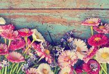 Esküvő & Virág