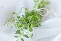 | Herbs |