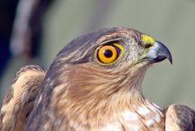 Falcon research