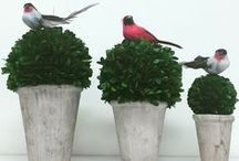Preserved Topiaries / Come visit us at our Doncaster store for more colours and styles!