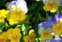 Flowers / by Tim/Rhonda Rainey