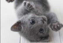 Aren't We Cute?