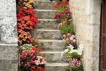 flores e cia