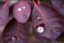 Marsala Pantone Color of the Year / Color inspiration for landscape design