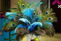 Fluffy Feathers & Dazzling Diamonds