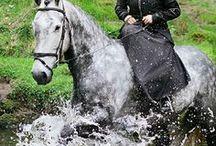 Sidesaddle Riding & Sidesaddles / Riding and sidesaddles